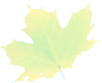 acerblad-lichtgroen