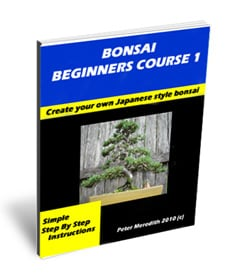 Bonsai Beginners Cource